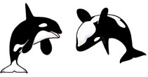 Rare Earth Gallery ORCA (EARRINGS)