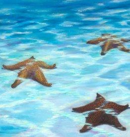 Susan Roberts I Sea Stars (Giclee, Ltd. Ed, Gallery Wrap, 8x10)