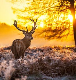 Rare Earth Gallery Red Deer at Dawn (Md, 203 Pieces, Artisanal Wooden Jigsaw Puzzle)
