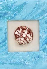 Sandra Stroot Shadowbox Shells (Fluid Acrylic, 8x8)