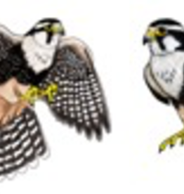 Rare Earth Gallery FALCON (APLOMADO, EARRINGS)