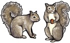 Rare Earth Gallery SQUIRREL (GRAY, EARRINGS)