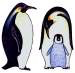 Rare Earth Gallery PENGUIN (EMPEROR, EARRINGS)