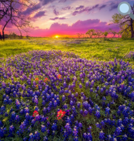 Rare Earth Gallery Bluebonnets (Teaser, 49 Pieces, Artisanal Wooden Jigsaw Puzzle)