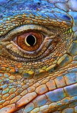 Rare Earth Gallery Blue Iguana (Teaser, 50 Pieces, Artisanal Wooden Jigsaw Puzzle)