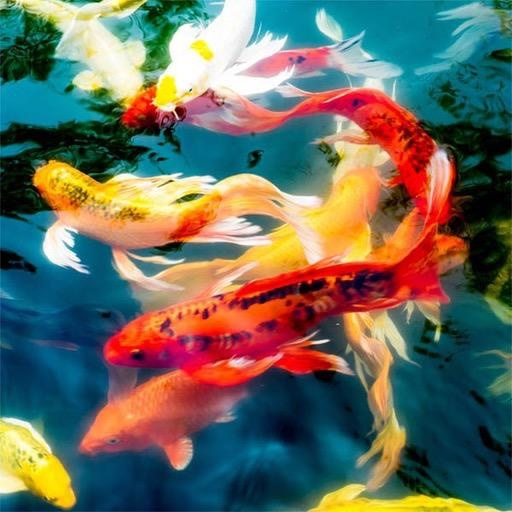 Rare Earth Gallery Koi (Md, 204 Pieces, Artisanal Wooden Jigsaw Puzzle)