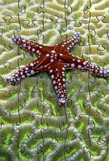 Rare Earth Gallery Starfish on Brain Coral (Teaser, 49 Pieces, Artisanal Wooden Jigsaw Puzzle)