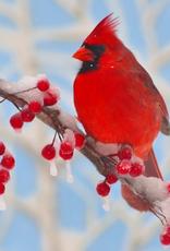 Rare Earth Gallery Winter Cardinal (Teaser, 50 Pieces, Artisanal Wooden Jigsaw Puzzle)