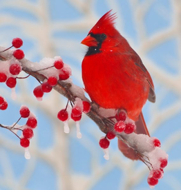 Rare Earth Gallery Winter Cardinal (Teaser, 50 Pieces, Artisanal Wooden Jigsaw Puzzle)
