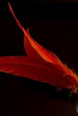 Jazzminton LED Birdies