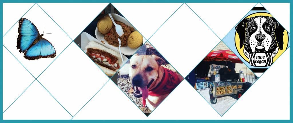 In The Neighbourhood - Rescue Dogs