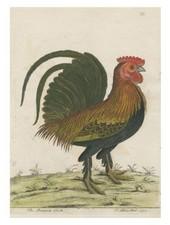JOHN DERIAN John Derian Bantam Cock Card w/ Envelope