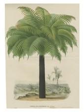 JOHN DERIAN John Derian Palm Card w/ Envelope