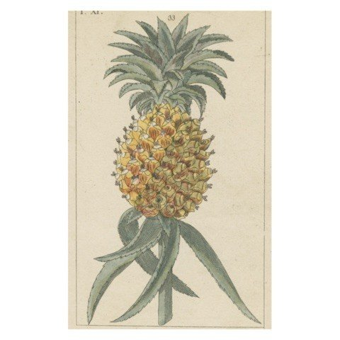 JOHN DERIAN John Derian Pineapple Postcard