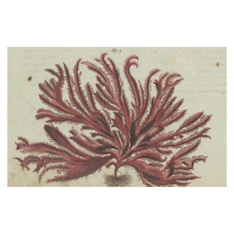 JOHN DERIAN John Derian Red Seaweed Postcard