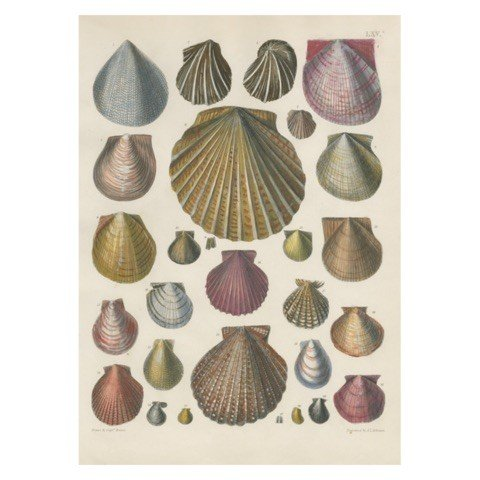 JOHN DERIAN John Derian Shells Card w/ Envelope