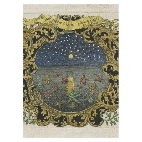 JOHN DERIAN John Derian Starfish at Night Card w/ Envelope