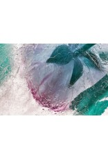 """Paeonia suffruticosa - Peony"" by Heather Monks"