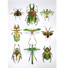 """Insect Poster"" (12x18) by Kirsten Beard"