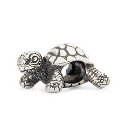 African Tortoise TAGBE-20049