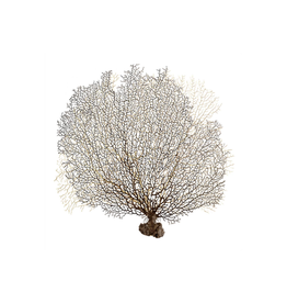 Leftbank Art Underwater Branches I 40 x 40