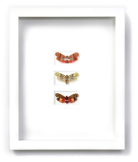 11 x 14 Planthopper Trio in White