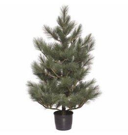 "PONDEROSA PINE PORCH TREE 60""H"