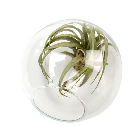Bolsk - Table Sphere