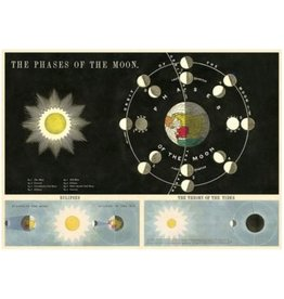 Poster The Phases Of The Moon