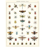 Poster Natural History Insects