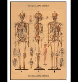 Poster Skeleton