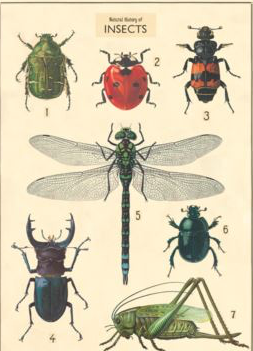 Poster Large Insects