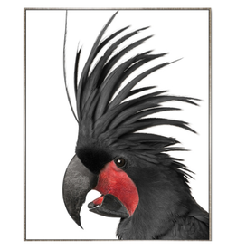 Framed Canvas - Black Cockatoo