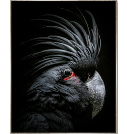 Floating Frame Black Cockatoo Black Background
