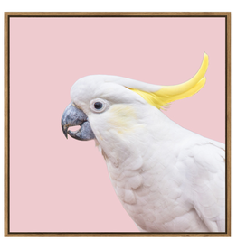 Floating Frame Pastel Cockatoo