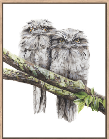 Floating Frame Tawny Frogmouths