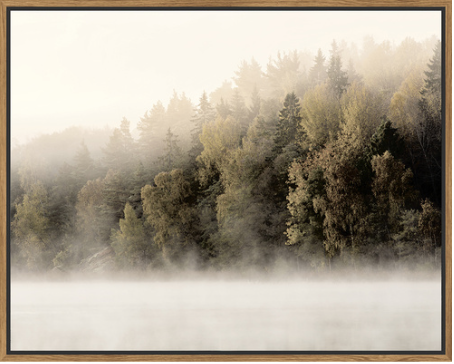 Floating Frame Misty Treeline