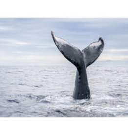 Canvas of Whale Tail