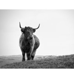Canvas - Bovine in Black and White