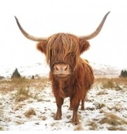 Canvas - Sepia Highland Cow (Small)