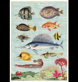 Poster Fish