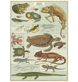Poster Reptiles & Amphibians
