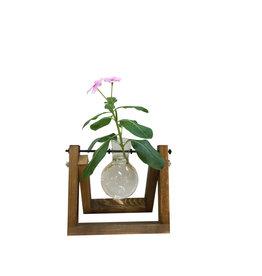 Bulb Vase Single Terrarium
