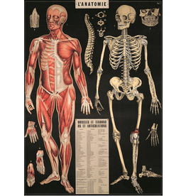 Poster L'Anatomie