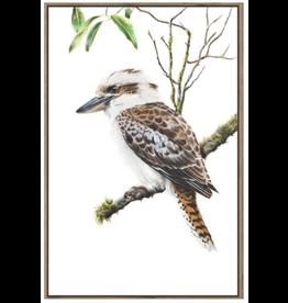 Framed Canvas - Kookaburra on Branch