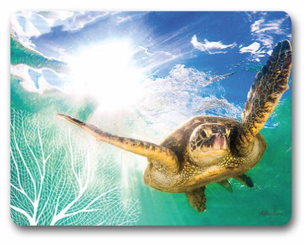 Placemats Set/6 Turtle -  Swimming