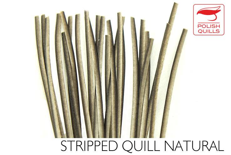 POLISH QUILL POLISH STRIPPED PEACOCK QUILLS