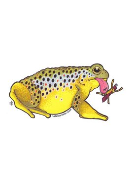 Remedy Provisions Toad Brown Trout Decal