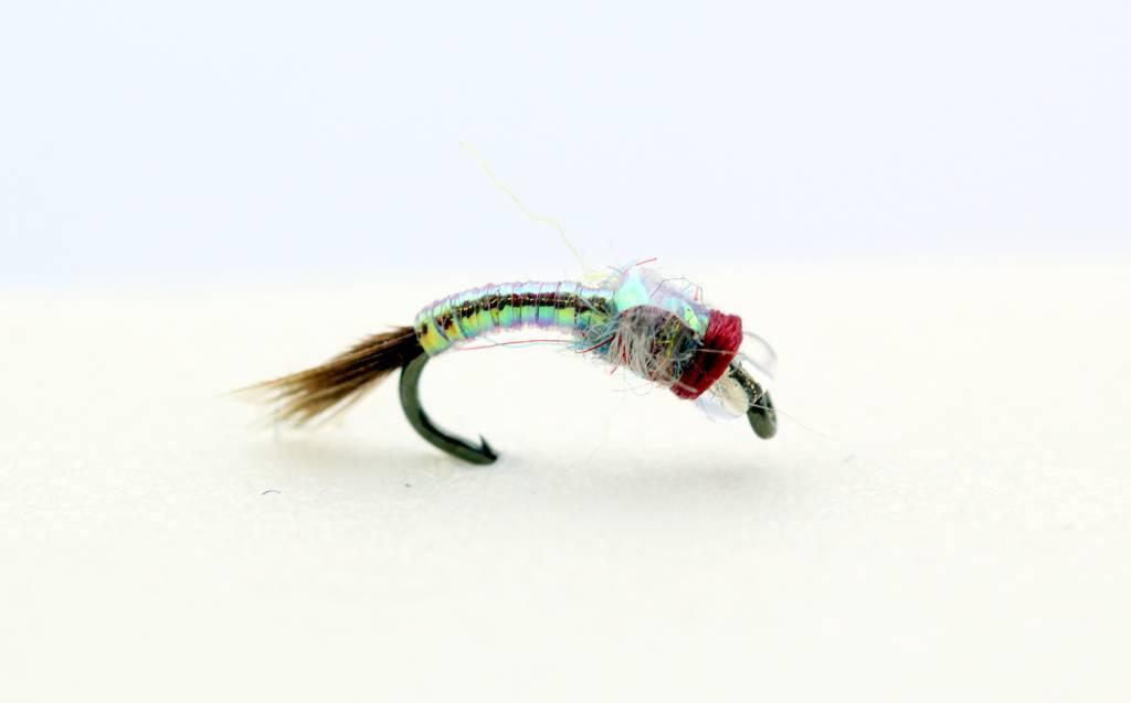 CATCH Rainbow Warrior