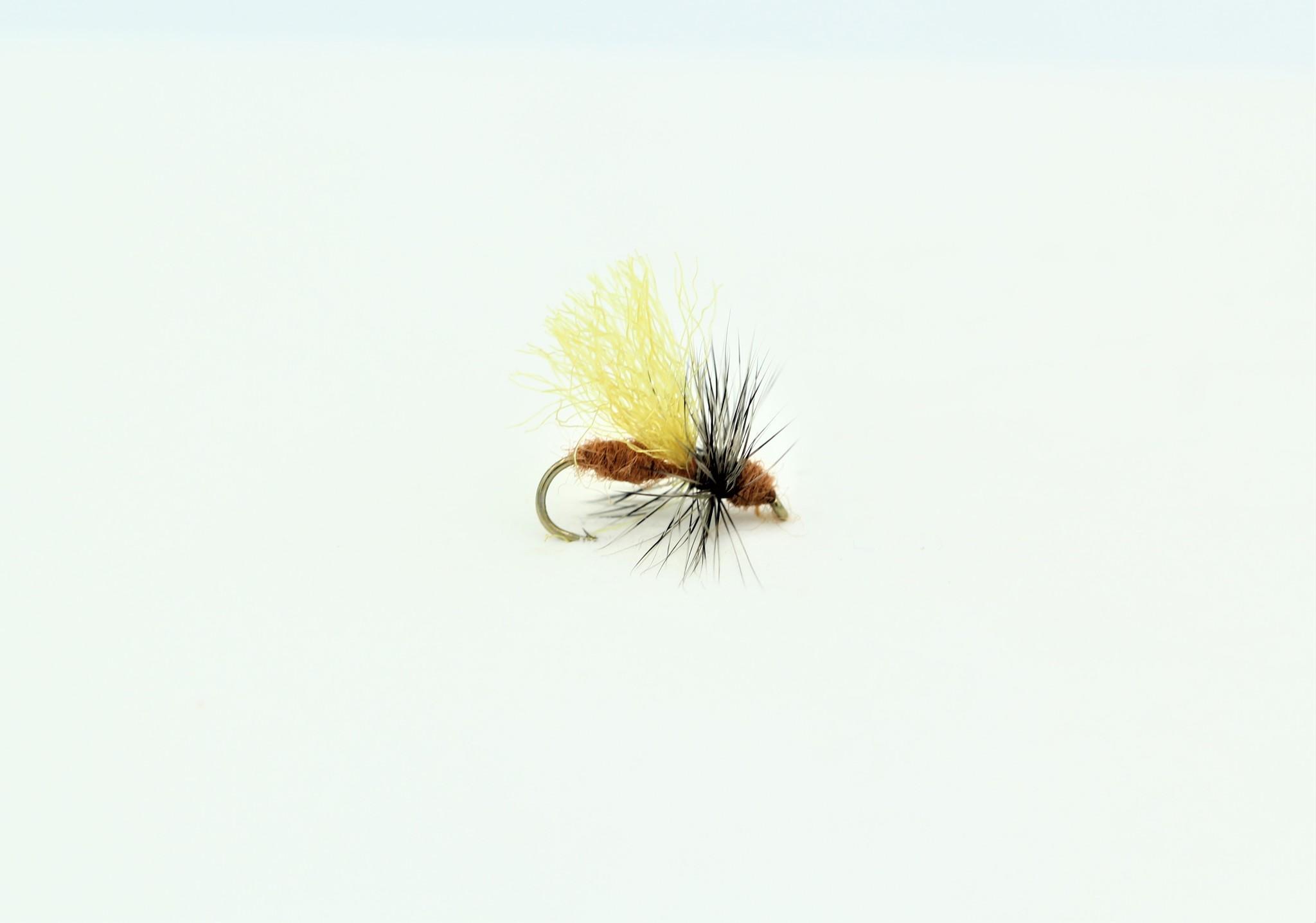 CINNAMON FLYING ANT